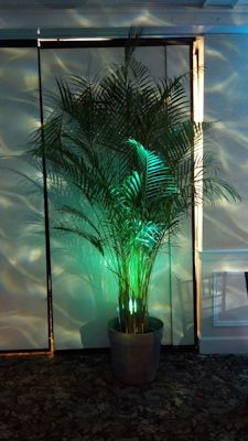 palm trees and led water effect light